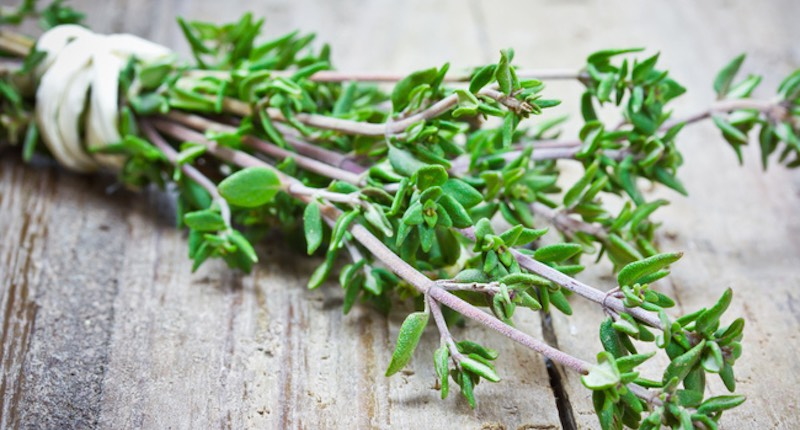 Image result for Thyme Destroys Strep Throat, Flu Virus And Fights Respiratory Infections