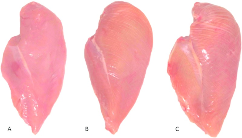 Chicken breast fillet white-striping