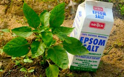 Surprising Ways To Use Epsom Salt In Your Garden