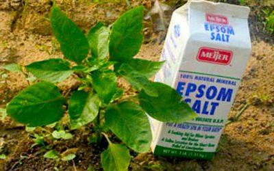 Surprising Ways To Use Epsom Salt In Your Garden