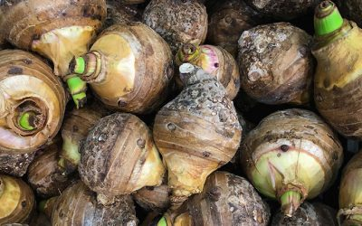 Taro Root: All You Need To Know About Its Amazing Health Benefits