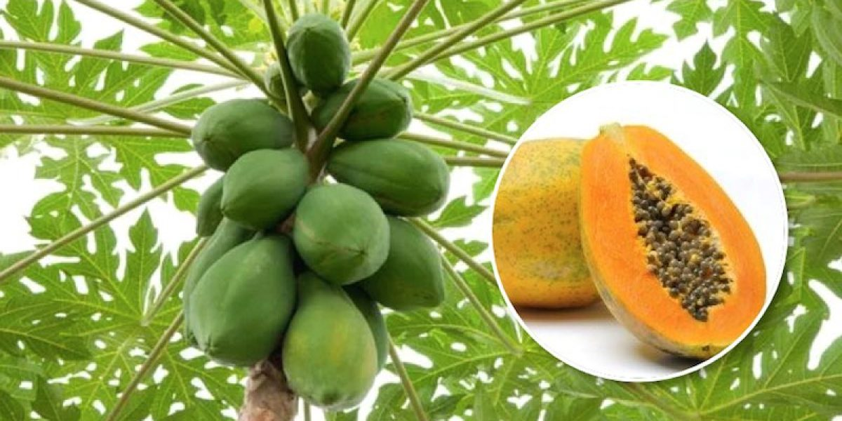 How To Include Every Part Of This Superfood Papaya In An Anti-Cancer Diet
