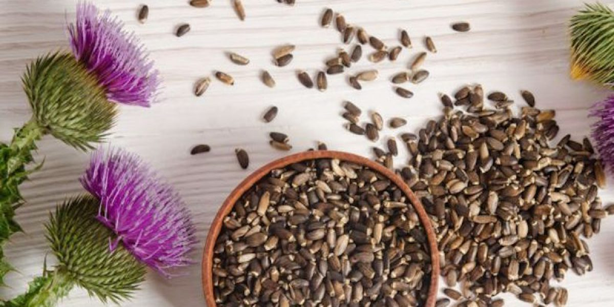 Milk Thistle: Nature's Gift Of Detox For Your Liver And Kidneys