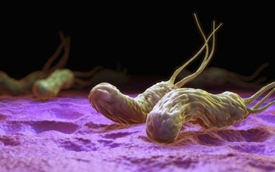 How To Completely Eradicate Helicobacter Pylori (H.Pylori) With These Natural Treatments