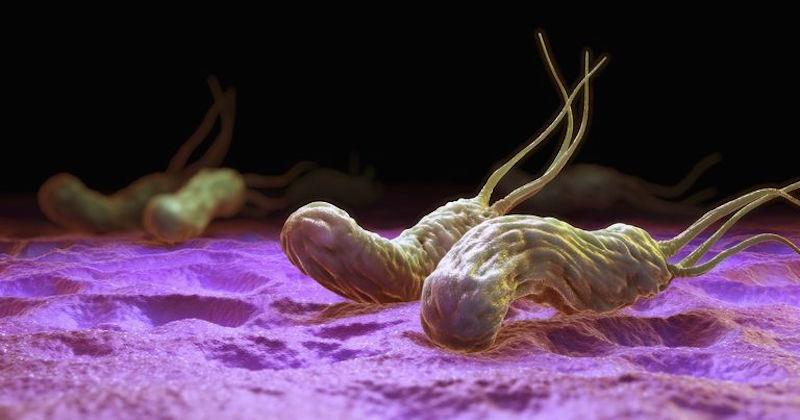 helicobacter pylori natural treatments