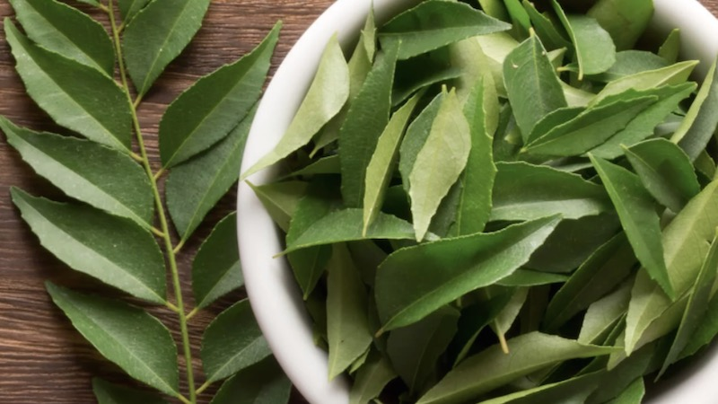 anti-cancer properties of curry leaves