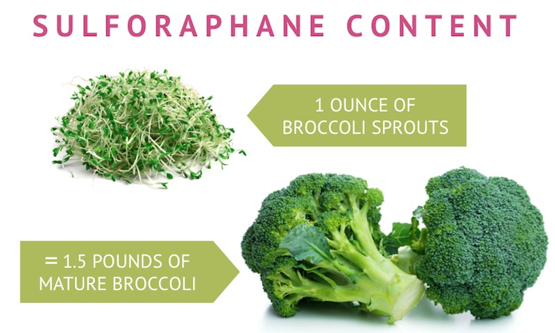 comparison of sulforaphane content