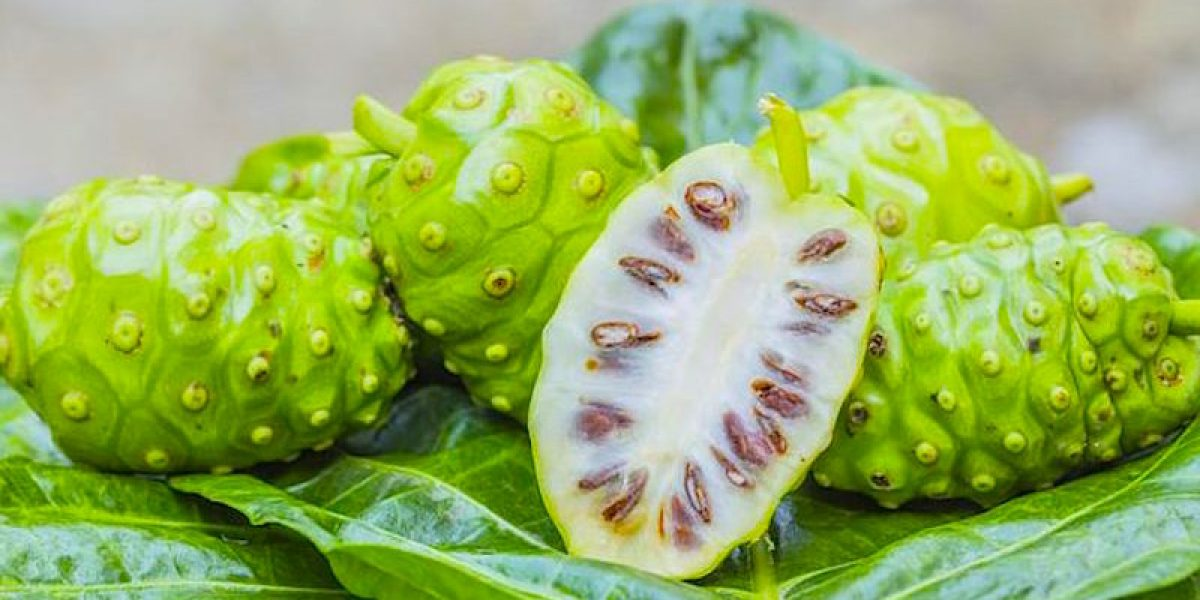 Eat Noni Fruit To Fight Infections, Protect Your Liver And Relieve Arthritic Joint Pains