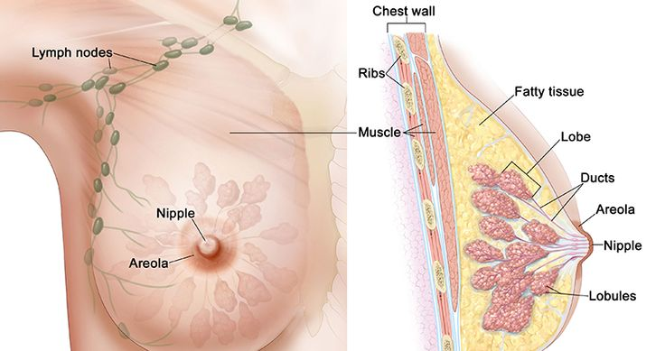 underarm and breast lymph nodes
