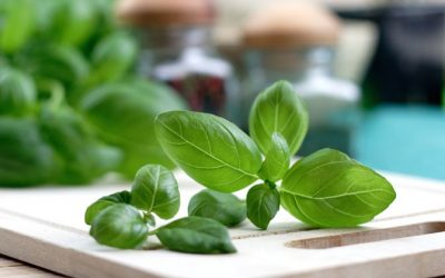 The Surprising Health Benefits And Medicinal Uses Of Sweet Basil