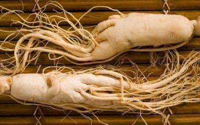 Panax Ginseng: The Panacea For All Types Of Ailments
